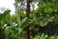 Hillo_Tropical_Garden_-_0003
