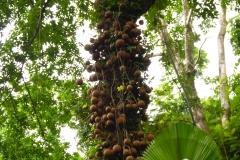 Hillo_Tropical_Garden_-_0004