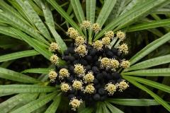Hillo_Tropical_Garden_-_0006