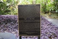 Hillo_Tropical_Garden_-_0009