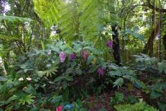 Hillo_Tropical_Garden_-_0010
