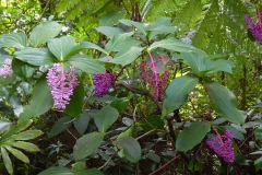 Hillo_Tropical_Garden_-_0011
