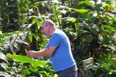 Hillo_Tropical_Garden_-_0014