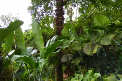 Hillo Tropical Garden - 0003