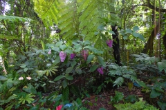 Hillo Tropical Garden - 0010