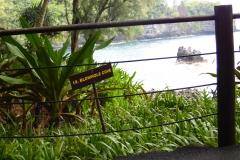 Hillo Tropical Garden - 0028